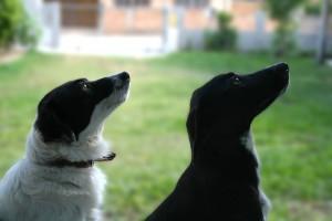 Hundar gillar torrfoder, men vanlig mat är också bra